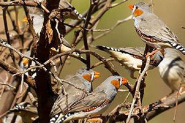 New Research Shows Physiological Effects of Mate Separation in Birds