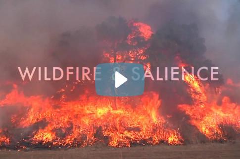 Video: Wildfire & Salience