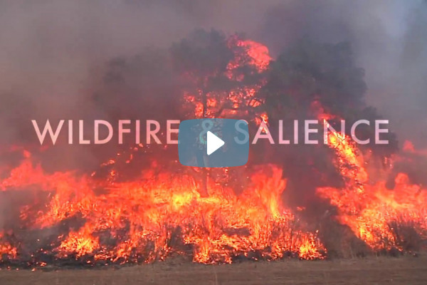Video: Wildfire & Salience